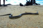 A Snake on the Beach